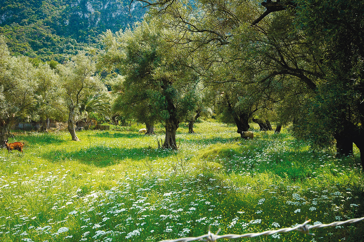 The Venetian olive grove is perfect for a bicycle ride | Lefkada Slow Guide