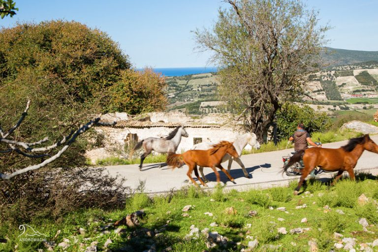 Peratia and old Plagia | Horses | Lefkada Slow Guide
