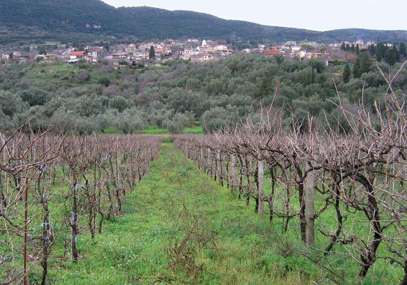 Vineyards in Agios Petros | Alternative activities in Lefkada
